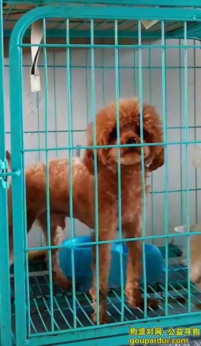 秦皇岛找狗,寻找爱犬沫沫 公泰迪4岁 于5.24日在工人南里小区走失,它是一只非常可爱的宠物狗狗,希望它早日回家,不要变成流浪狗。
