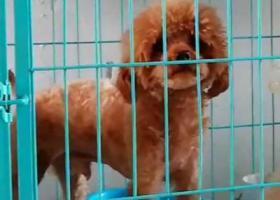 寻狗启示,寻找爱犬沫沫 公泰迪4岁 于5.24日在工人南里小区走失,它是一只非常可爱的宠物狗狗,希望它早日回家,不要变成流浪狗。