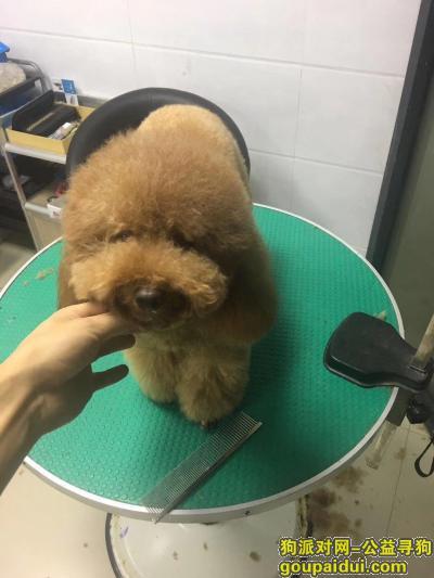 嘉兴丢狗,嘉兴斜西街寻走丢的狗狗,它是一只非常可爱的宠物狗狗,希望它早日回家,不要变成流浪狗。