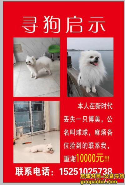 盐城寻狗启示,本人在滨海新时代广场丢人博美犬一只,拾获者重谢,它是一只非常可爱的宠物狗狗,希望它早日回家,不要变成流浪狗。