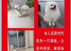 寻狗启示,本人在滨海新时代广场丢人博美犬一只,拾获者重谢,它是一只非常可爱的宠物狗狗,希望它早日回家,不要变成流浪狗。