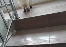 狗狗丢失的地方在贵州省毕节市纳雍县王家寨
