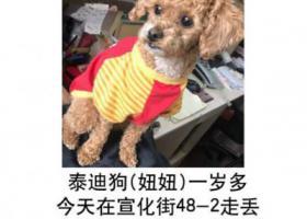 寻狗启示,寻狗启示 重金酬谢,它是一只非常可爱的宠物狗狗,希望它早日回家,不要变成流浪狗。