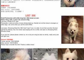 寻狗启示,【重谢5000】白色博美,丢失在浦东,周康路周祝公路附,它是一只非常可爱的宠物狗狗,希望它早日回家,不要变成流浪狗。