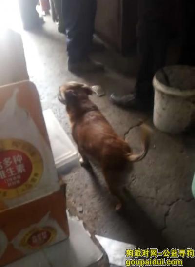 四平丢狗,寻找丢失小母狗 土狗,它是一只非常可爱的宠物狗狗,希望它早日回家,不要变成流浪狗。