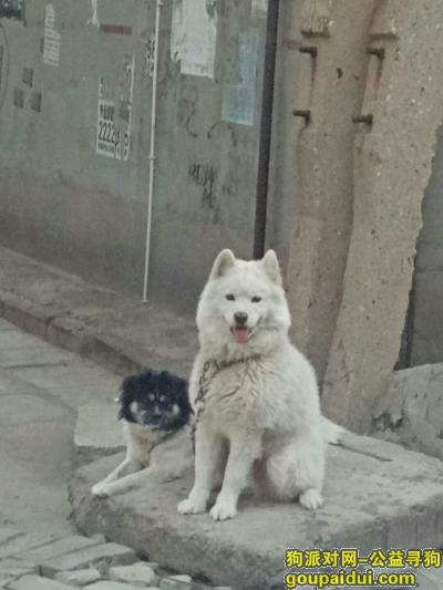 ,两只狗狗一起丢的。必有重谢!,它是一只非常可爱的宠物狗狗,希望它早日回家,不要变成流浪狗。