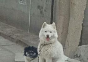 寻狗启示,两只狗狗一起丢的。必有重谢!,它是一只非常可爱的宠物狗狗,希望它早日回家,不要变成流浪狗。