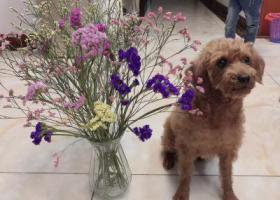 寻狗启示,寻找家里养了三年小狗,它是一只非常可爱的宠物狗狗,希望它早日回家,不要变成流浪狗。