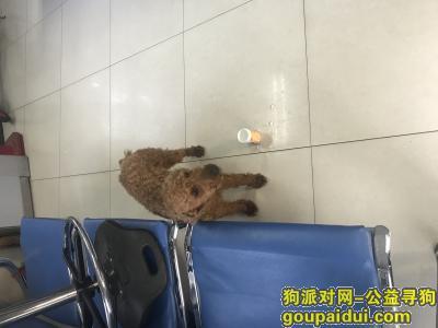 青岛寻狗主人,青岛捡到,带狗链,快到派出所认领吧,它是一只非常可爱的宠物狗狗,希望它早日回家,不要变成流浪狗。