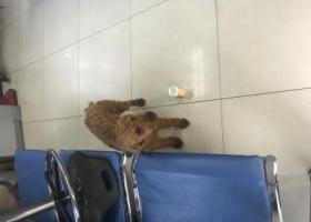 寻狗启示,青岛捡到,带狗链,快到派出所认领吧,它是一只非常可爱的宠物狗狗,希望它早日回家,不要变成流浪狗。