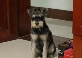 寻狗启示,爱狗丢失,必有重谢!!!南宁!!!,它是一只非常可爱的宠物狗狗,希望它早日回家,不要变成流浪狗。