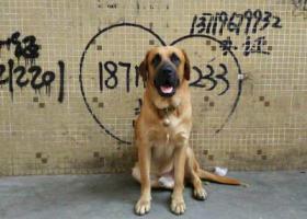 寻狗启示,寻找家人多多 东莞高埗走失,它是一只非常可爱的宠物狗狗,希望它早日回家,不要变成流浪狗。