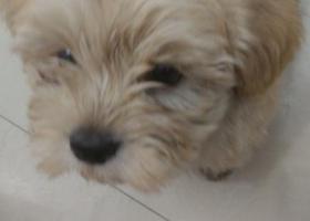 寻狗启示,杭州江干区高沙路红绿灯路口捡到一只小狗,它是一只非常可爱的宠物狗狗,希望它早日回家,不要变成流浪狗。