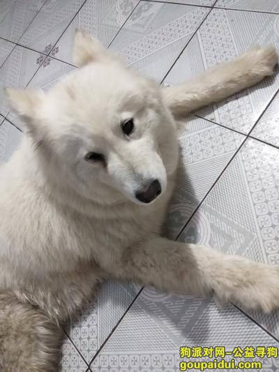 沈阳找狗主人,寻找狗主人希望与我联系,它是一只非常可爱的宠物狗狗,希望它早日回家,不要变成流浪狗。