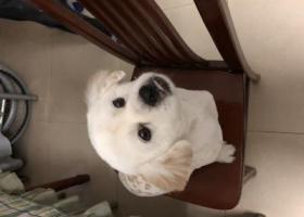 寻狗启示,寻爱狗启示寻找走失的狗狗,它是一只非常可爱的宠物狗狗,希望它早日回家,不要变成流浪狗。