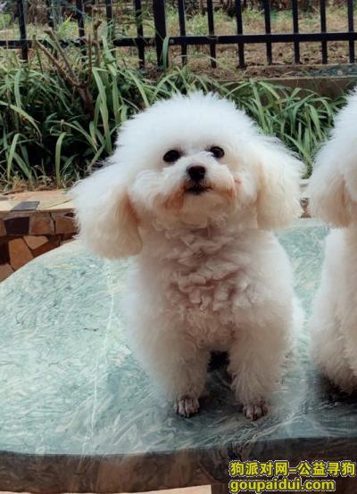 淮安寻狗,急寻一只小型白色贵宾(泰迪),于6月2日下午在北门桥处跌下电动车,悬赏2000元,它是一只非常可爱的宠物狗狗,希望它早日回家,不要变成流浪狗。