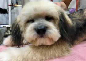 寻狗启示,寻找在上海丢失的狗狗谢谢大家,它是一只非常可爱的宠物狗狗,希望它早日回家,不要变成流浪狗。
