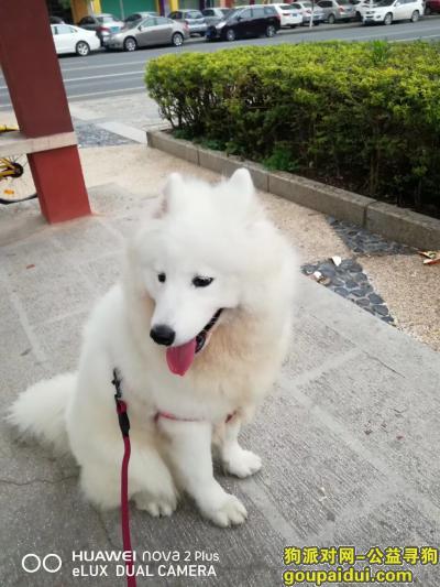 赣州寻狗启示,爱犬走失于赣州市章江北大道河岸,已经走失一个星期了,它是一只非常可爱的宠物狗狗,希望它早日回家,不要变成流浪狗。