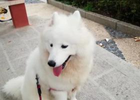 寻狗启示,爱犬走失于赣州市章江北大道河岸,已经走失一个星期了,它是一只非常可爱的宠物狗狗,希望它早日回家,不要变成流浪狗。
