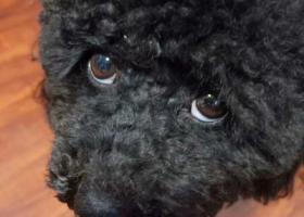 寻狗启示,重庆市大渡口区寻找狗狗,现金报酬,它是一只非常可爱的宠物狗狗,希望它早日回家,不要变成流浪狗。