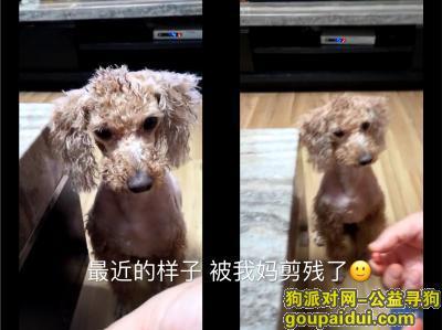 ,重金寻狗启示,重金酬谢,急急急!!!,它是一只非常可爱的宠物狗狗,希望它早日回家,不要变成流浪狗。