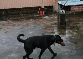 寻狗启示,烟头你快点回来好不好,它是一只非常可爱的宠物狗狗,希望它早日回家,不要变成流浪狗。