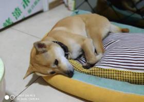 寻狗启示,民心佳园C区寻狗启示,它是一只非常可爱的宠物狗狗,希望它早日回家,不要变成流浪狗。