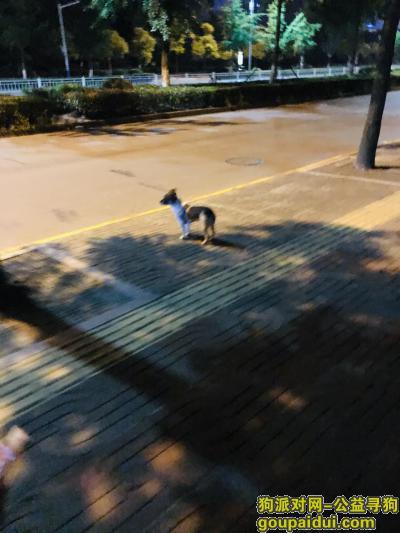 南通捡到狗,崇川区 在金融汇附近跟着走了工农南路两公里后消失,它是一只非常可爱的宠物狗狗,希望它早日回家,不要变成流浪狗。