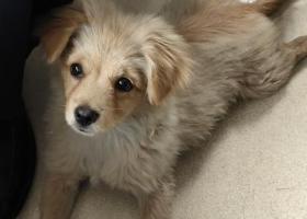 寻狗启示,五联村碧湖大道延峰彼欧,它是一只非常可爱的宠物狗狗,希望它早日回家,不要变成流浪狗。