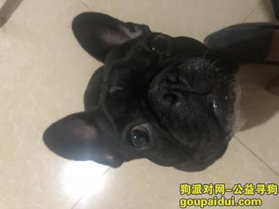 泸州寻狗启示,黑色法斗今晚凌晨在网吧丢失,它是一只非常可爱的宠物狗狗,希望它早日回家,不要变成流浪狗。