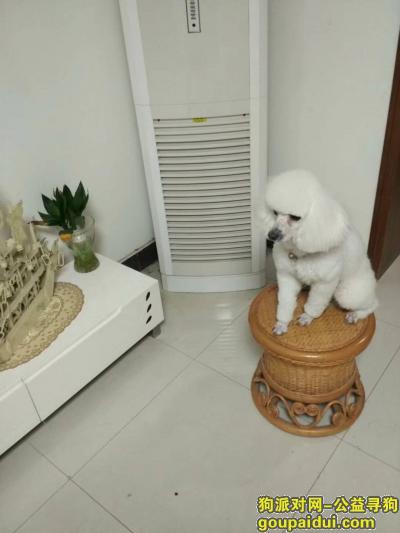 寻狗启示,新城区华清路寻找爱宠点点,它是一只非常可爱的宠物狗狗,希望它早日回家,不要变成流浪狗。