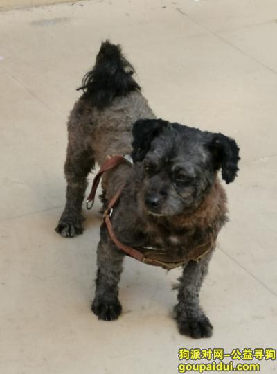 ,谁家的狗丢了,黑色的,它是一只非常可爱的宠物狗狗,希望它早日回家,不要变成流浪狗。