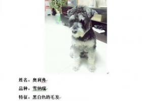 寻狗启示,哪位好心人士看到请联系我!必有重谢!,它是一只非常可爱的宠物狗狗,希望它早日回家,不要变成流浪狗。