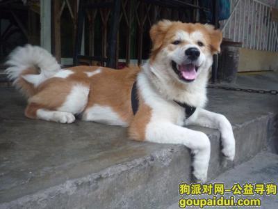 寻狗启示,想念你想你回来好吗?,它是一只非常可爱的宠物狗狗,希望它早日回家,不要变成流浪狗。