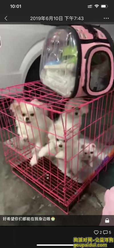 达州寻狗启示,江湾城五期幼儿园附近,它是一只非常可爱的宠物狗狗,希望它早日回家,不要变成流浪狗。