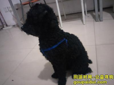 杭州捡到狗,九堡杭乔路时装街路口附近黑色,它是一只非常可爱的宠物狗狗,希望它早日回家,不要变成流浪狗。