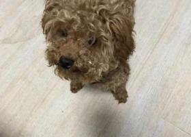 寻狗启示,2019年6月17日  名士豪庭走失泰迪一只,哪位好心人捡到请联系,重谢,它是一只非常可爱的宠物狗狗,希望它早日回家,不要变成流浪狗。