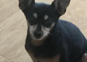 寻狗启示,小狗鹿鹿于6月20日下午或傍晚在河畔花园小区内丢失,丢失时身穿蓝色纸尿裤,鹿鹿已经15岁了,它是一只非常可爱的宠物狗狗,希望它早日回家,不要变成流浪狗。