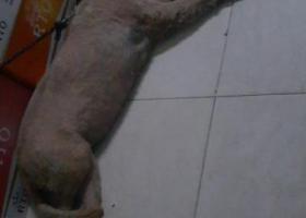 寻狗启示,白云区太和镇谢家庄永利南街,它是一只非常可爱的宠物狗狗,希望它早日回家,不要变成流浪狗。