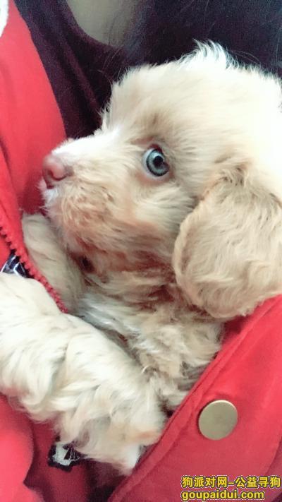 怀化丢狗,在怀化市寻找一只蓝眼睛的串串拜托了,它是一只非常可爱的宠物狗狗,希望它早日回家,不要变成流浪狗。
