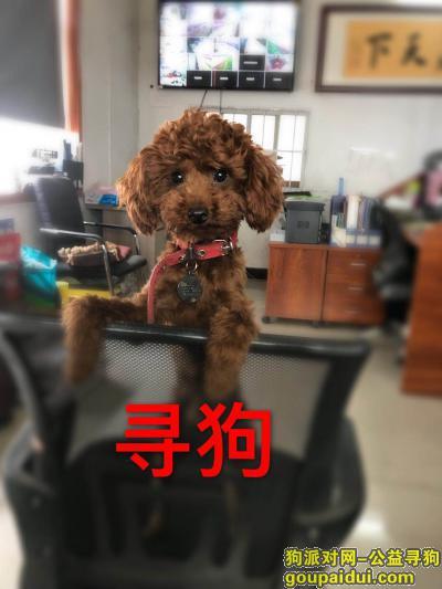 长葛寻狗启示,河南省长葛市后河镇附近丢失,如有捡到者,我愿意1000元酬谢!,它是一只非常可爱的宠物狗狗,希望它早日回家,不要变成流浪狗。