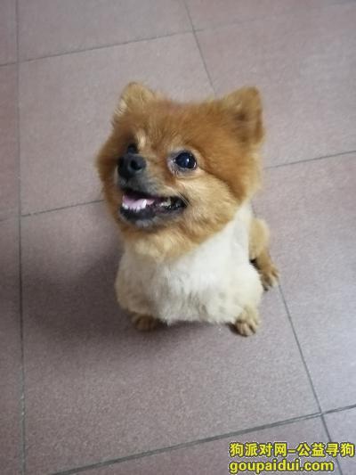 ,帮它找到它主人希望它进来找到自己的主人,它是一只非常可爱的宠物狗狗,希望它早日回家,不要变成流浪狗。