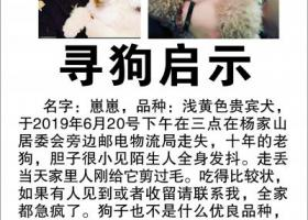 寻狗启示,长沙芙蓉区东二环杨家山居委会旁边邮政物流局走失重金寻狗,它是一只非常可爱的宠物狗狗,希望它早日回家,不要变成流浪狗。