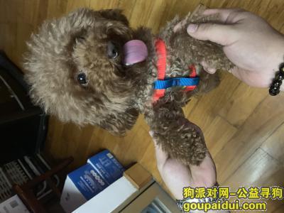 ,6.17号捡到一只棕色泰迪,2岁,它是一只非常可爱的宠物狗狗,希望它早日回家,不要变成流浪狗。