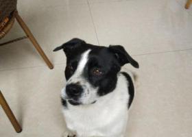 寻狗启示,十分着急 找寻陪伴7年的狗狗,它是一只非常可爱的宠物狗狗,希望它早日回家,不要变成流浪狗。