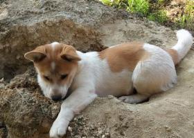 请帮帮忙,找到狗狗,它对我很重要