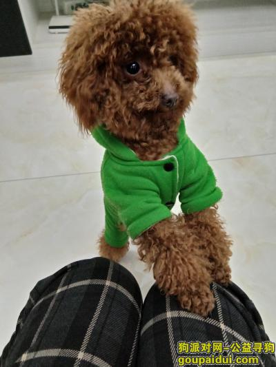 遂宁寻狗网,寻找狗狗,请大家帮助!,它是一只非常可爱的宠物狗狗,希望它早日回家,不要变成流浪狗。