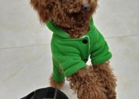 寻狗启示,寻找狗狗,请大家帮助!,它是一只非常可爱的宠物狗狗,希望它早日回家,不要变成流浪狗。
