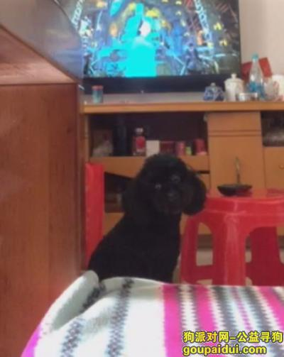 肇庆寻狗启示,,它是一只非常可爱的宠物狗狗,希望它早日回家,不要变成流浪狗。