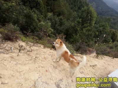 赣州找狗,急急急急!!非常急!!,它是一只非常可爱的宠物狗狗,希望它早日回家,不要变成流浪狗。